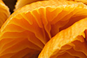Plant Photography Gallery - Contains an assortment of plant and fungi photos.